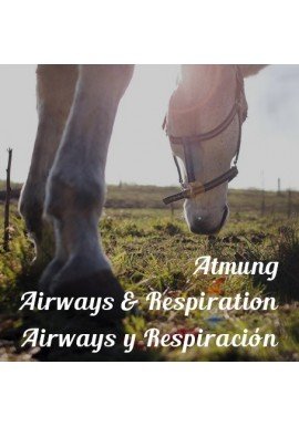 Airways & Respiration
