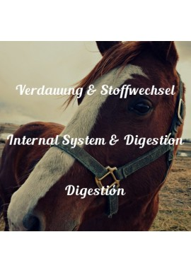 Internal System & Digestion