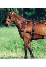Jockey-Rider